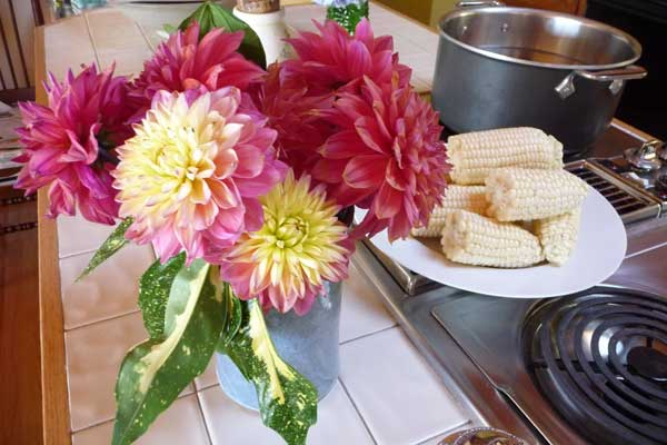 Dahlias and corn