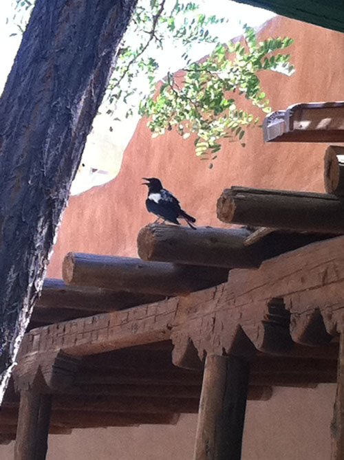Magpie at Mabel's