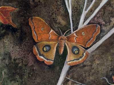 Moth, detail
