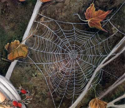 Spiderweb, detail
