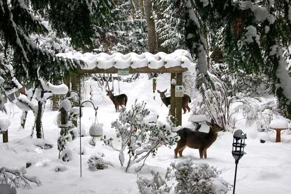 Three of Deer