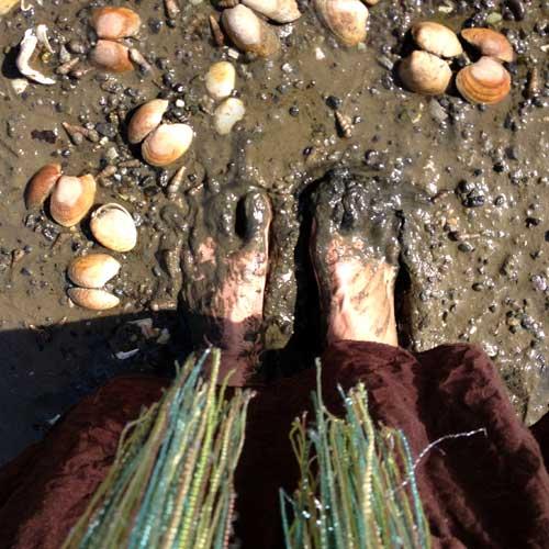 muddy feet, shells