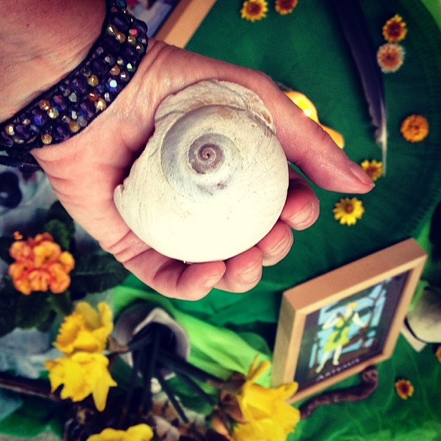 Moonsnail shell in hand (Behold the Mystery)