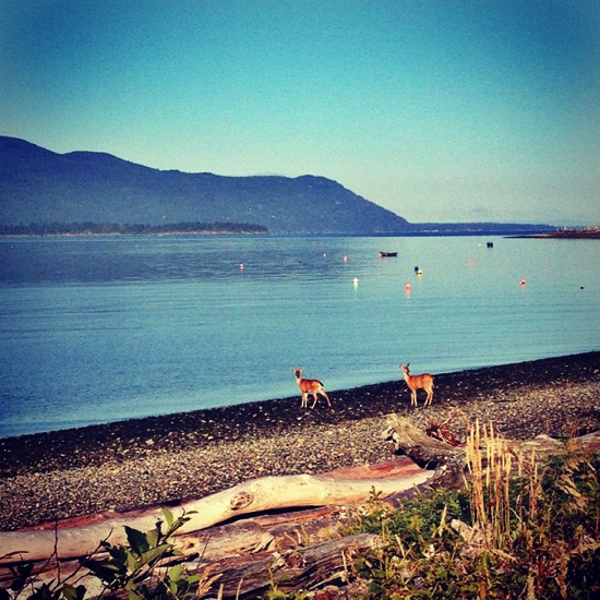 Deer on the beach