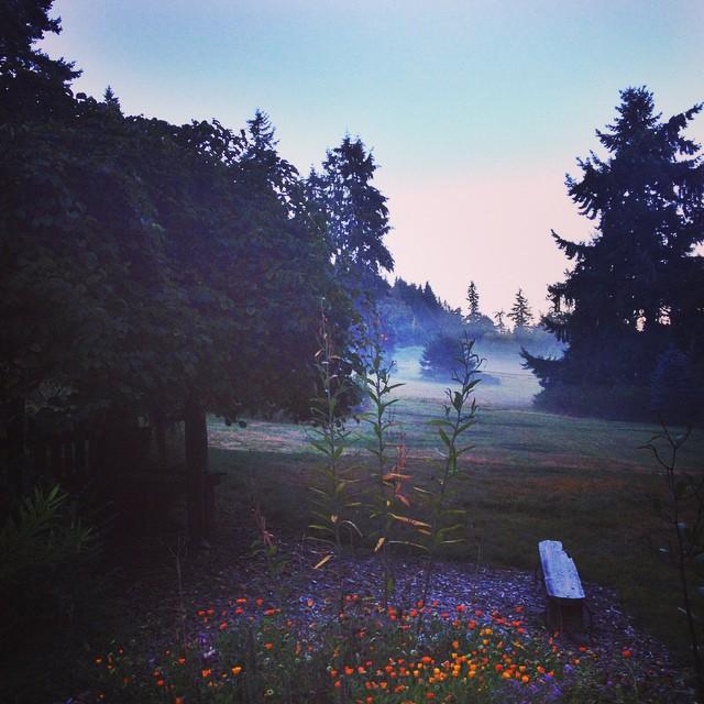 Dawn at Aldermarsh