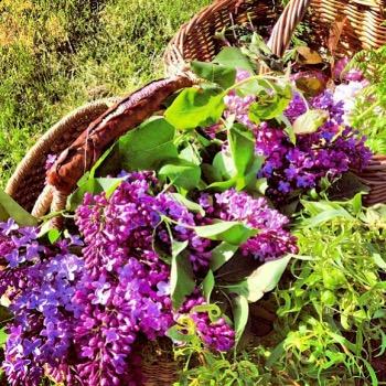 Lilacs & May Baskets