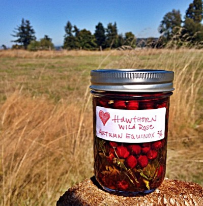 hawthorn rose tincture