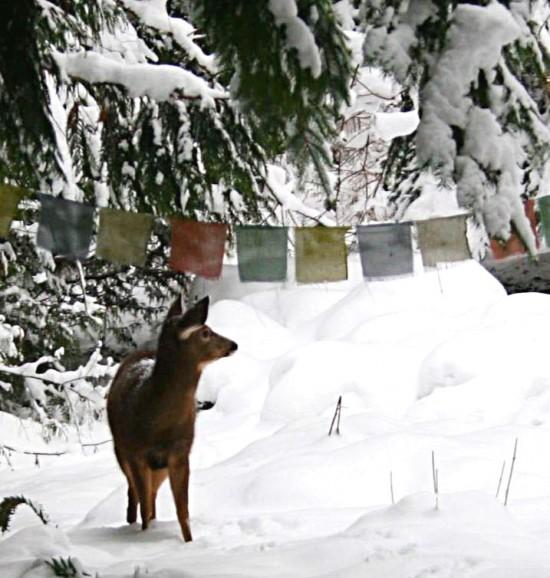 deer-snow-flags2_Fotor