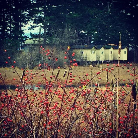 Deck the halls with wild rose hips ...