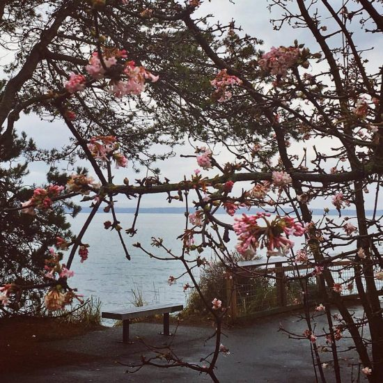 In town, on a walk in the rain by the bay between appointments, I was surprised by blossoms on the fifth day of the new year. They are beautiful, but much too early. A sign of climate change that is troubling.