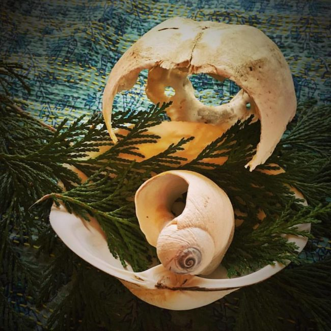 seal skull, shells